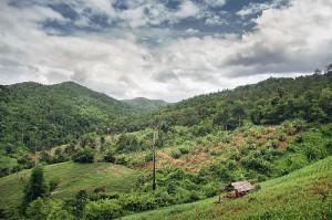 Guajataca Forest 02