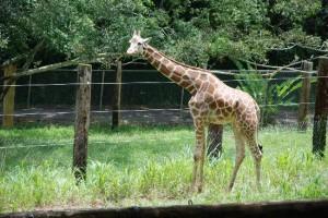 Mayagüez Zoo 02